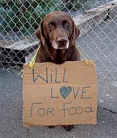Best Dog Nutrition