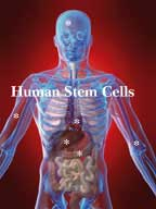 Your Own Adult Stem  Cells Repair Your  Body